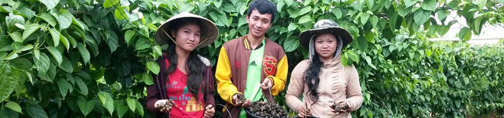 Maï Savanh Lao